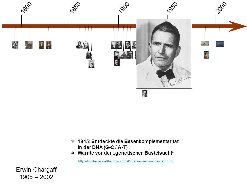"""1900 1850 1950 20001800 Erwin Chargaff 1905 – 2002  1945: Entdeckte die Basenkomplementarität in der DNA (G-C / A-T)  Warnte vor der """"genetischen Bastelsucht http://tomheller.de/theholycymbal/interview/erwin-chargaff.html"""