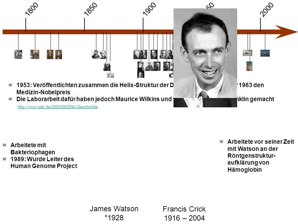 1900 1850 1950 20001800 James Watson *1928 Francis Crick 1916 – 2004  1953: Veröffentlichten zusammen die Helix-Struktur der DNA und bekamen dafür 1963 den Medizin-Nobelpreis  Die Laborarbeit dafür haben jedoch Maurice Wilkins und vor allem Rosalind Franklin gemacht  Arbeitete mit Bakteriophagen  1989: Wurde Leiter des Human Genome Project  Arbeitete vor seiner Zeit mit Watson an der Röntgenstruktur- aufklärung von Hämoglobin http://www.zeit.de/2003/09/DNA-Geschichte