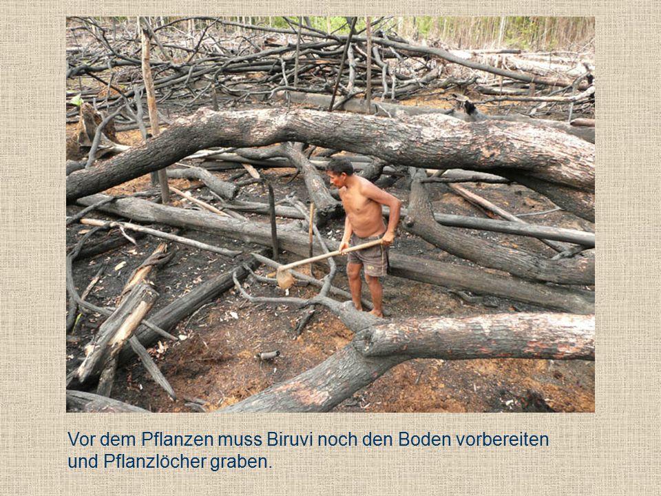 Vor dem Pflanzen muss Biruvi noch den Boden vorbereiten und Pflanzlöcher graben.