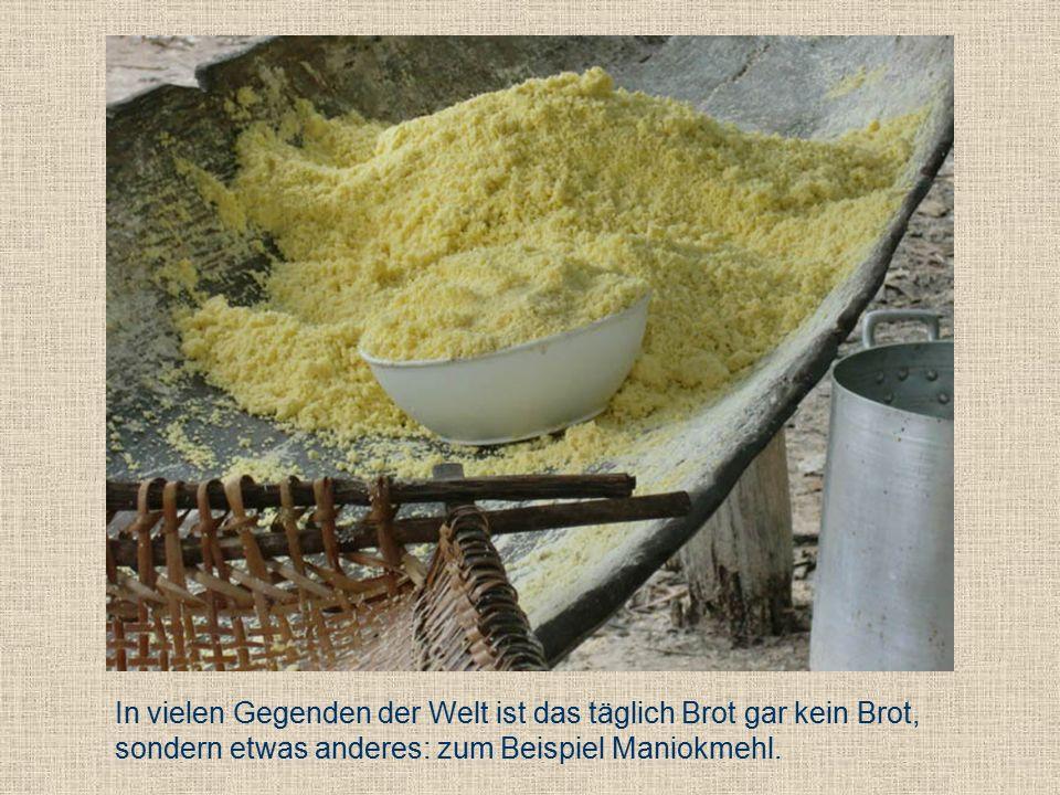 In vielen Gegenden der Welt ist das täglich Brot gar kein Brot, sondern etwas anderes: zum Beispiel Maniokmehl.