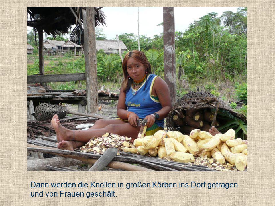 Dann werden die Knollen in großen Körben ins Dorf getragen und von Frauen geschält.