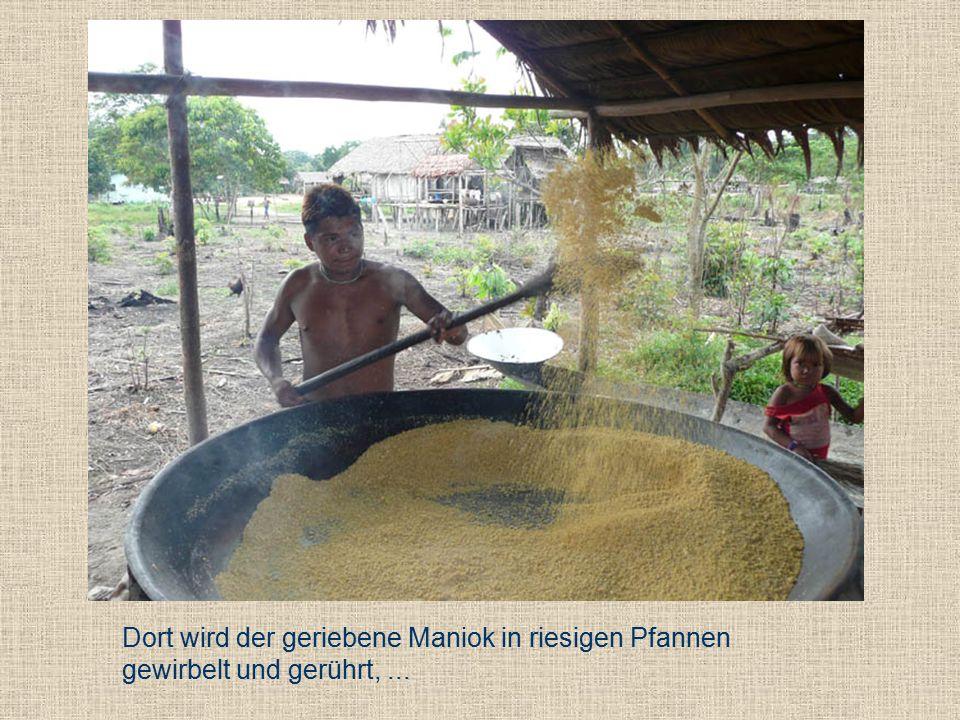 Dort wird der geriebene Maniok in riesigen Pfannen gewirbelt und gerührt,...