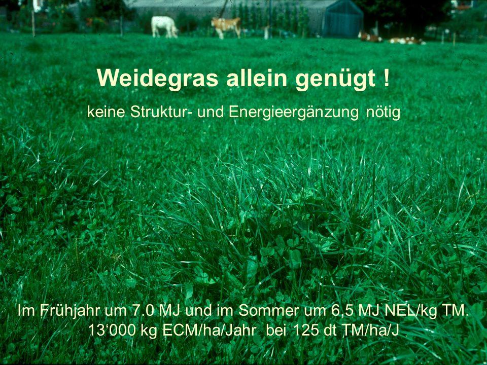 Weidegras allein genügt ! keine Struktur- und Energieergänzung nötig Im Frühjahr um 7.0 MJ und im Sommer um 6,5 MJ NEL/kg TM. 13'000 kg ECM/ha/Jahr be
