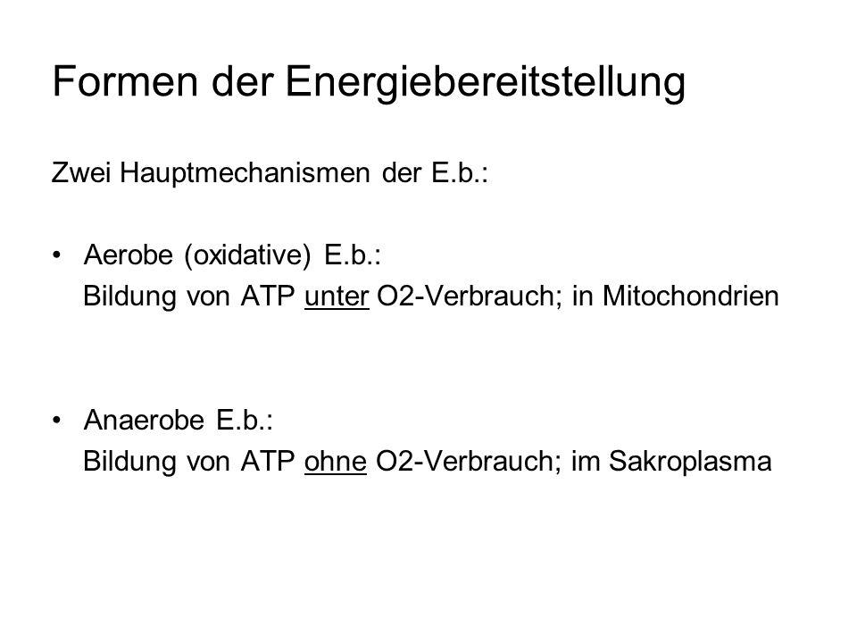 Formen der Energiebereitstellung Zwei Hauptmechanismen der E.b.: Aerobe (oxidative) E.b.: Bildung von ATP unter O2-Verbrauch; in Mitochondrien Anaerobe E.b.: Bildung von ATP ohne O2-Verbrauch; im Sakroplasma