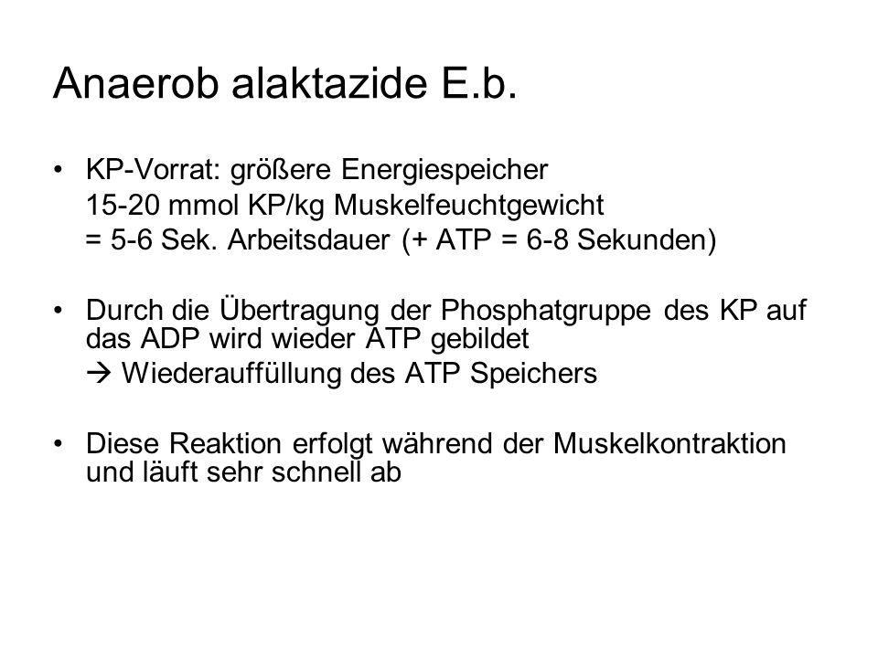Anaerob alaktazide E.b.