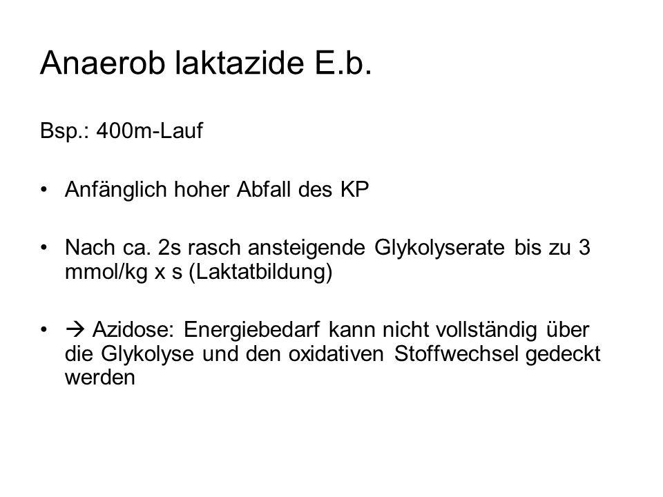 Anaerob laktazide E.b. Bsp.: 400m-Lauf Anfänglich hoher Abfall des KP Nach ca.