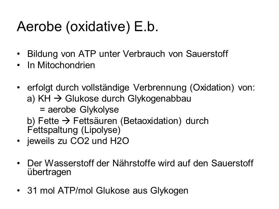 Aerobe (oxidative) E.b.