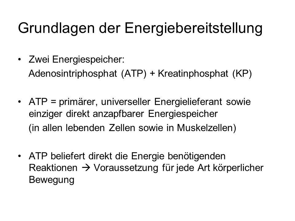 Grundlagen der Energiebereitstellung ATP-Vorrat: 5 mmol ATP/kg Muskelfeuchtmasse (sehr geringe Menge an ATP in Muskelzelle gespeichert) = 3-4 Muskelkontraktionen (1-2 Sek.