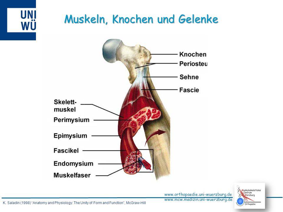 www.orthopaedie.uni-wuerzburg.de www.mcw.medizin.uni-wuerzburg.de Arnold I.