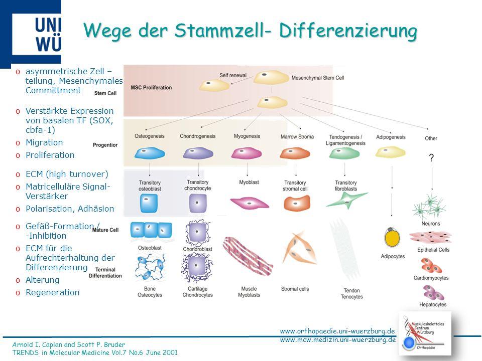www.orthopaedie.uni-wuerzburg.de www.mcw.medizin.uni-wuerzburg.de Definitionen Osteoporose  Knochenverlust  Brüche ohne Gewalteinwirkung Sarcopenie  Muskelschwund  Sturz durch Kraftlosigkeit