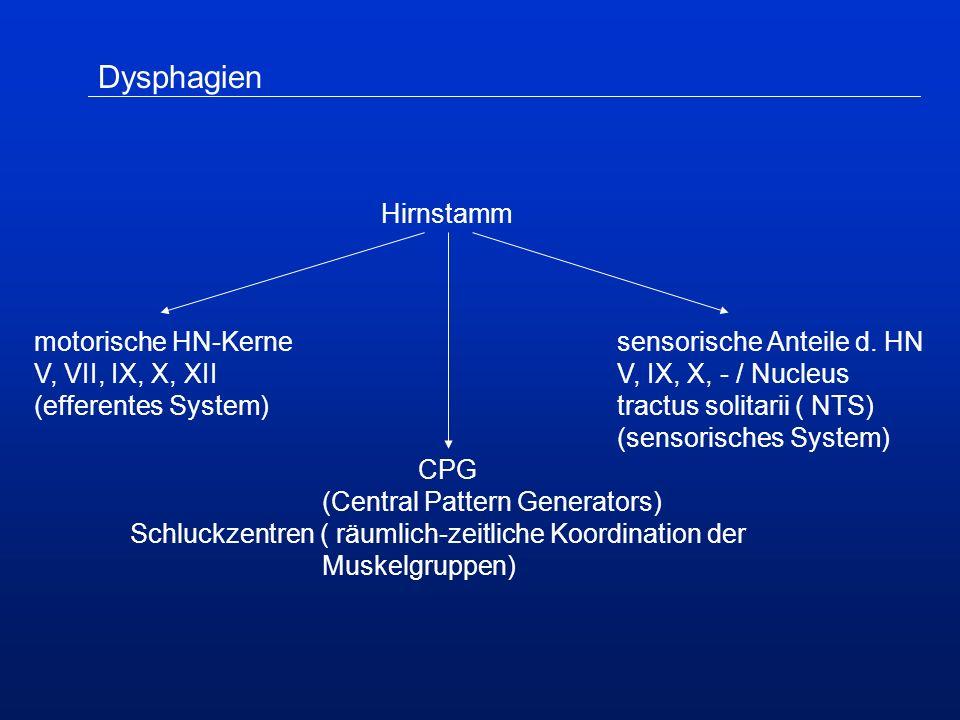 Hirnstamm motorische HN-Kerne sensorische Anteile d.