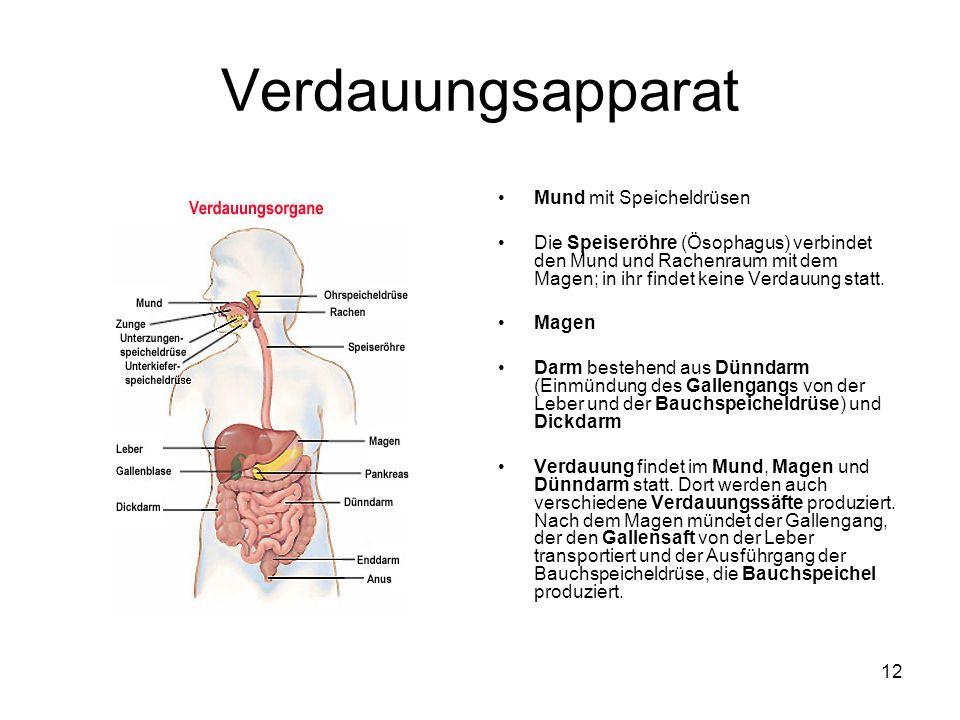 Mund mit Speicheldrüsen Die Speiseröhre (Ösophagus) verbindet den Mund und Rachenraum mit dem Magen; in ihr findet keine Verdauung statt. Magen Darm b