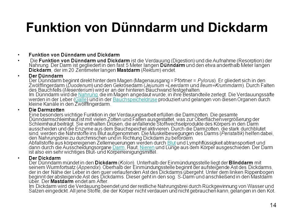 14 Funktion von Dünndarm und Dickdarm Die Funktion von Dünndarm und Dickdarm ist die Verdauung (Digestion) und die Aufnahme (Resorption) der Nahrung.