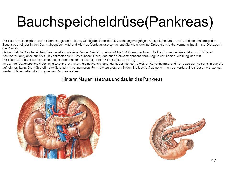 47 Bauchspeicheldrüse(Pankreas) Die Bauchspeicheldrüse, auch Pankreas genannt, ist die wichtigste Drüse für die Verdauungsvorgänge. Als exokrine Drüse