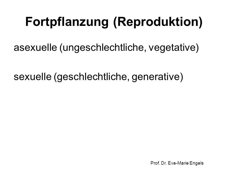 Prof. Dr. Eve-Marie Engels Fortpflanzung (Reproduktion) asexuelle (ungeschlechtliche, vegetative) sexuelle (geschlechtliche, generative)