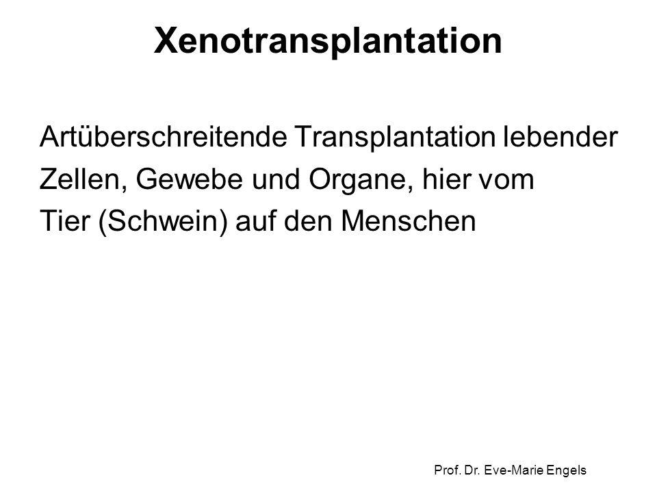 Prof. Dr. Eve-Marie Engels Xenotransplantation Artüberschreitende Transplantation lebender Zellen, Gewebe und Organe, hier vom Tier (Schwein) auf den