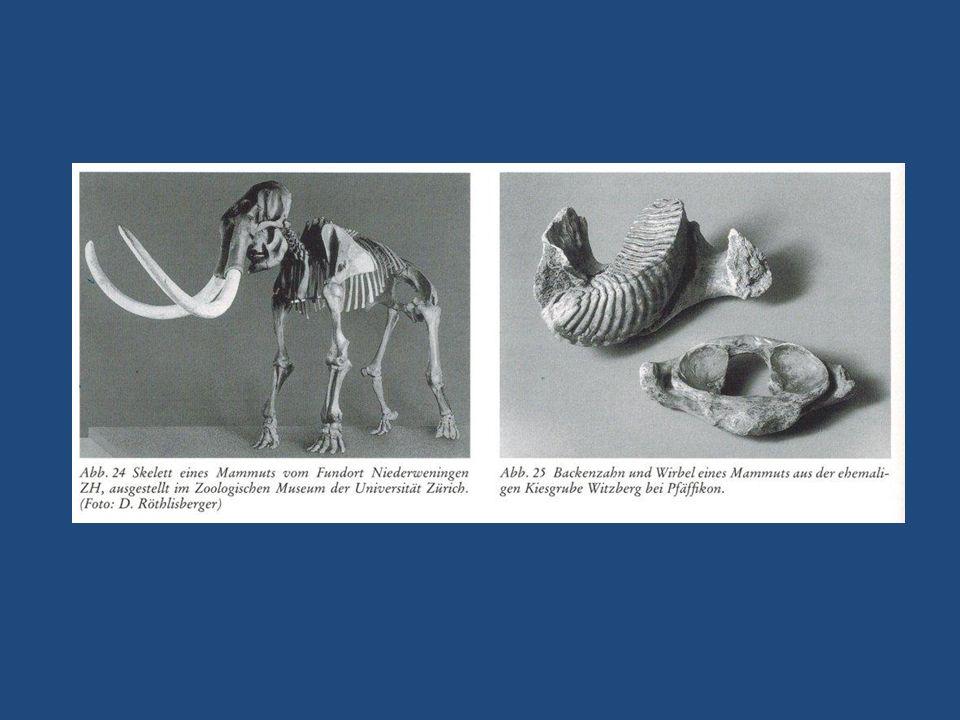 Jungsteinzeit 5500 – 2200 v.Chr.