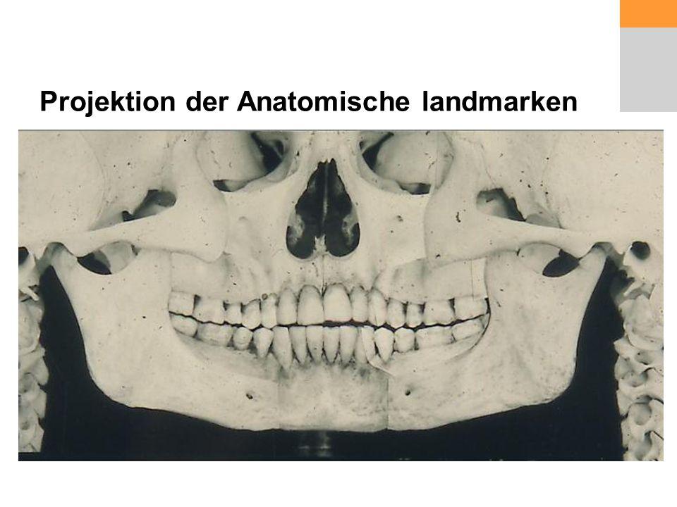 Projektion der Anatomische landmarken