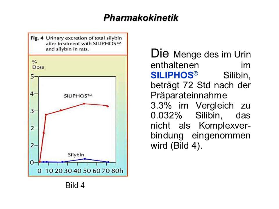 Die Menge des im Urin enthaltenen im SILIPHOS ® Silibin, beträgt 72 Std nach der Präparateinnahme 3.3% im Vergleich zu 0.032% Silibin, das nicht als Komplexver- bindung eingenommen wird (Bild 4).