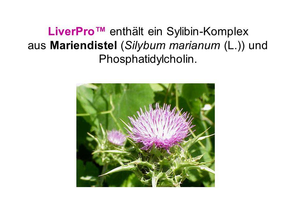LiverPro™ enthält ein Sylibin-Komplex aus Mariendistel (Silybum marianum (L.)) und Phosphatidylcholin.