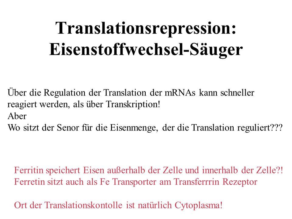 Translationsrepression: Eisenstoffwechsel-Säuger Über die Regulation der Translation der mRNAs kann schneller reagiert werden, als über Transkription.
