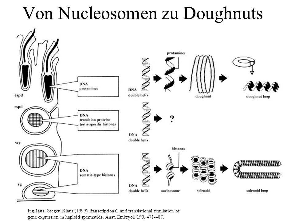 Eisen und Eisenparameter F.Matzkies, F. Tokmak, L.