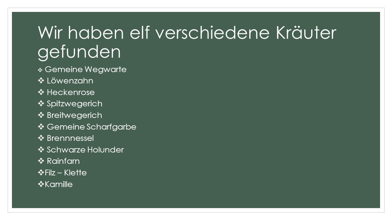 Wir haben elf verschiedene Kräuter gefunden  Gemeine Wegwarte  Löwenzahn  Heckenrose  Spitzwegerich  Breitwegerich  Gemeine Scharfgarbe  Brennnessel  Schwarze Holunder  Rainfarn  Filz – Klette  Kamille