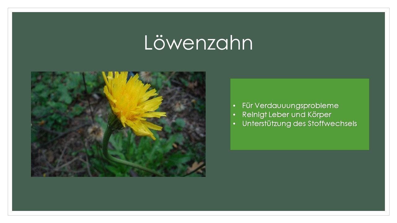 Löwenzahn Für Verdauuungsprobleme Für Verdauuungsprobleme Reinigt Leber und Körper Reinigt Leber und Körper Unterstützung des Stoffwechsels Unterstützung des Stoffwechsels