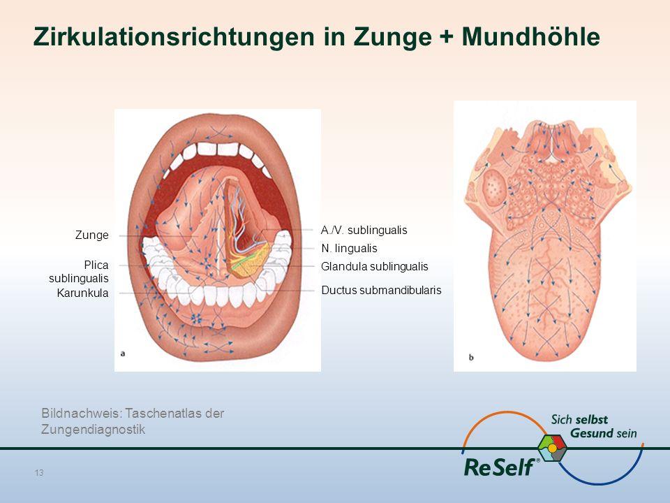 Zirkulationsrichtungen in Zunge + Mundhöhle 13 A./V. sublingualis N. lingualis Glandula sublingualis Ductus submandibularis Zunge Plica sublingualis K