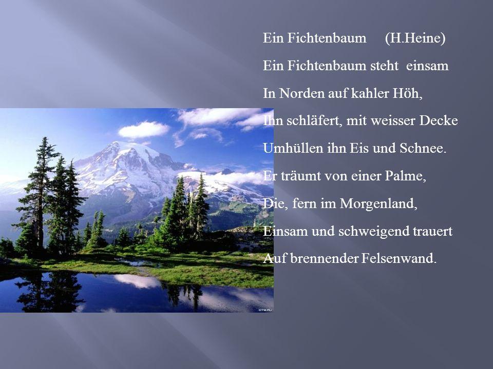 Ein Fichtenbaum (H.Heine) Ein Fichtenbaum steht einsam In Norden auf kahler H ӧ h, Ihn schl ӓ fert, mit weisser Decke Umhüllen ihn Eis und Schnee. Er