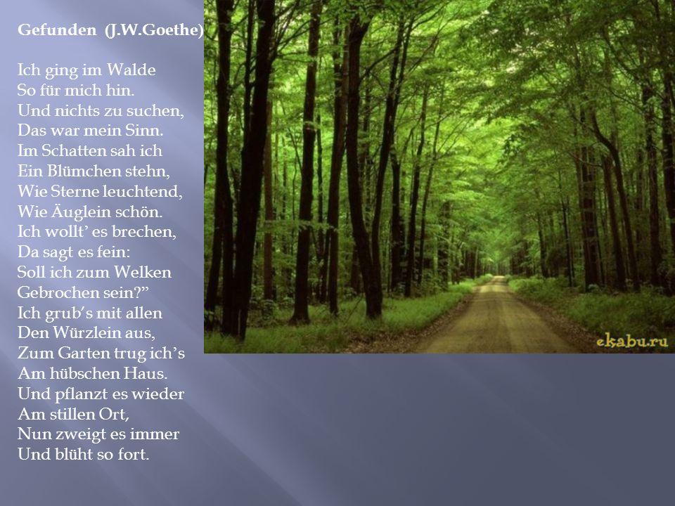 Gefunden ( J. W. Goethe ) Ich ging im Walde So f ü r mich hin. Und nichts zu suchen, Das war mein Sinn. Im Schatten sah ich Ein Bl ü mchen stehn, Wie