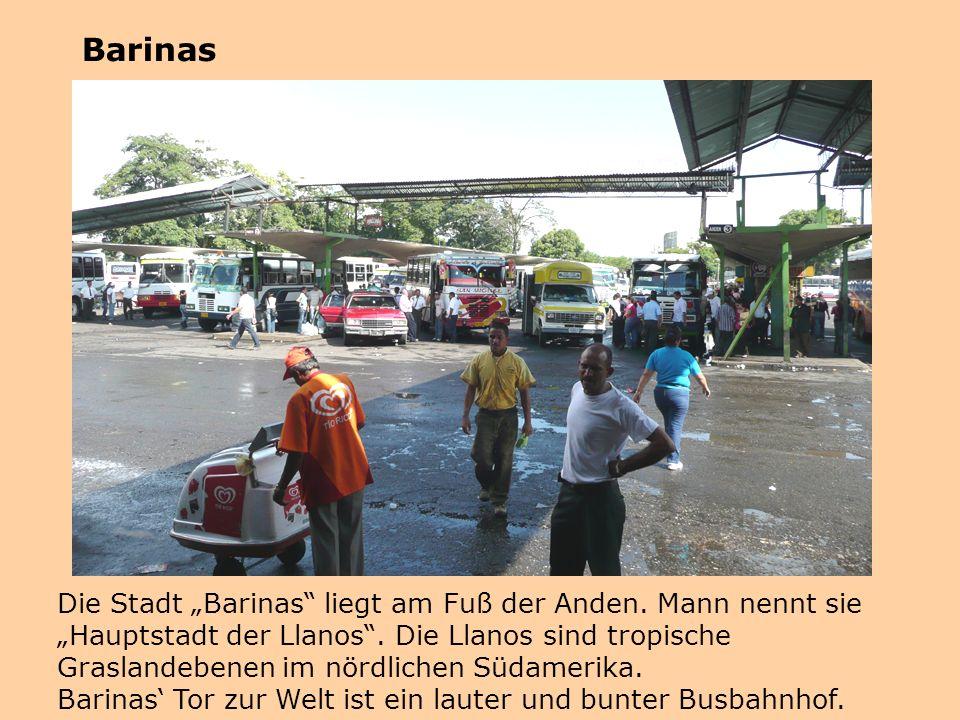 """Die Stadt """"Barinas"""" liegt am Fuß der Anden. Mann nennt sie """"Hauptstadt der Llanos"""". Die Llanos sind tropische Graslandebenen im nördlichen Südamerika."""