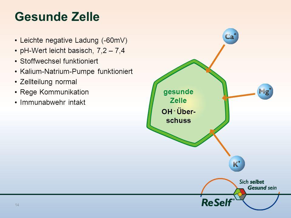Gesunde Zelle Leichte negative Ladung (-60mV) pH-Wert leicht basisch, 7,2 – 7,4 Stoffwechsel funktioniert Kalium-Natrium-Pumpe funktioniert Zellteilung normal Rege Kommunikation Immunabwehr intakt 14 gesunde Zelle OH - Über- schuss