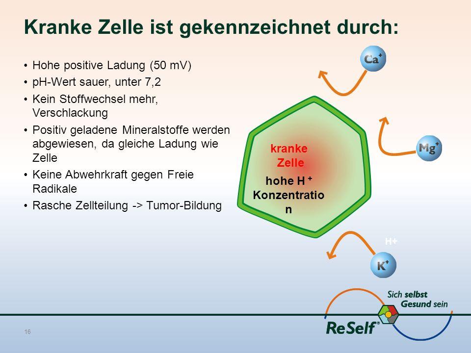 Kranke Zelle ist gekennzeichnet durch: Hohe positive Ladung (50 mV) pH-Wert sauer, unter 7,2 Kein Stoffwechsel mehr, Verschlackung Positiv geladene Mineralstoffe werden abgewiesen, da gleiche Ladung wie Zelle Keine Abwehrkraft gegen Freie Radikale Rasche Zellteilung -> Tumor-Bildung 16 Mg H+ kranke Zelle hohe H + Konzentratio n