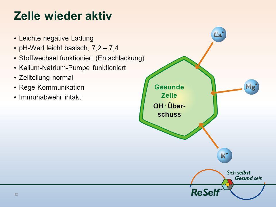 Zelle wieder aktiv Leichte negative Ladung pH-Wert leicht basisch, 7,2 – 7,4 Stoffwechsel funktioniert (Entschlackung) Kalium-Natrium-Pumpe funktioniert Zellteilung normal Rege Kommunikation Immunabwehr intakt 18 Gesunde Zelle OH - Über- schuss