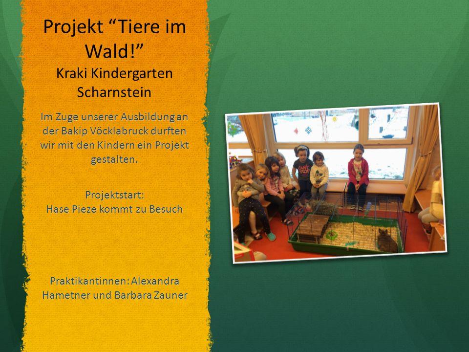 Projekt Tiere im Wald! Kraki Kindergarten Scharnstein Im Zuge unserer Ausbildung an der Bakip Vöcklabruck durften wir mit den Kindern ein Projekt gestalten.