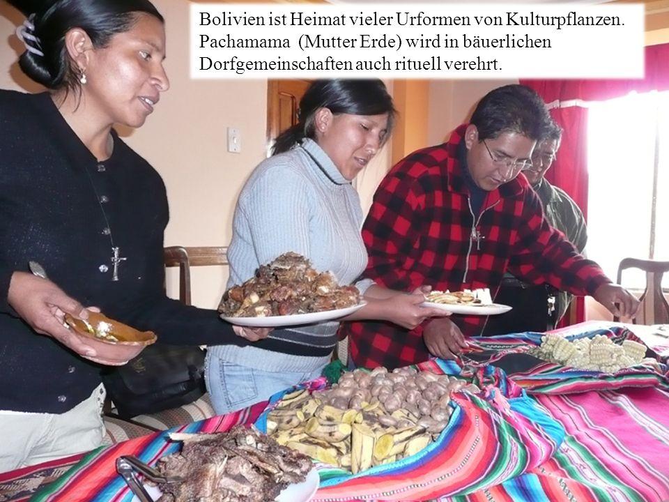 Bolivien ist Heimat vieler Urformen von Kulturpflanzen.