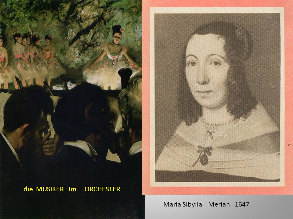 die MUSIKER Im ORCHESTER Maria Sibylla Merian 1647