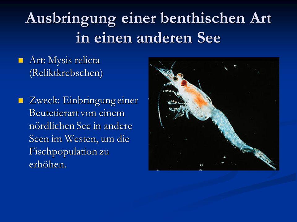 Ausbringung einer benthischen Art in einen anderen See Art: Mysis relicta (Reliktkrebschen) Art: Mysis relicta (Reliktkrebschen) Zweck: Einbringung einer Beutetierart von einem nördlichen See in andere Seen im Westen, um die Fischpopulation zu erhöhen.