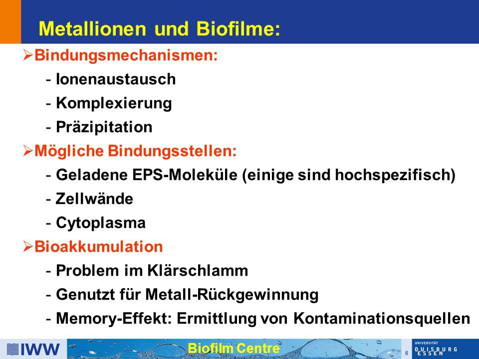 6 Metallionen und Biofilme:  Bindungsmechanismen: - Ionenaustausch - Komplexierung - Präzipitation  Mögliche Bindungsstellen: - Geladene EPS-Moleküle (einige sind hochspezifisch) - Zellwände - Cytoplasma  Bioakkumulation - Problem im Klärschlamm - Genutzt für Metall-Rückgewinnung - Memory-Effekt: Ermittlung von Kontaminationsquellen Biofilm Centre
