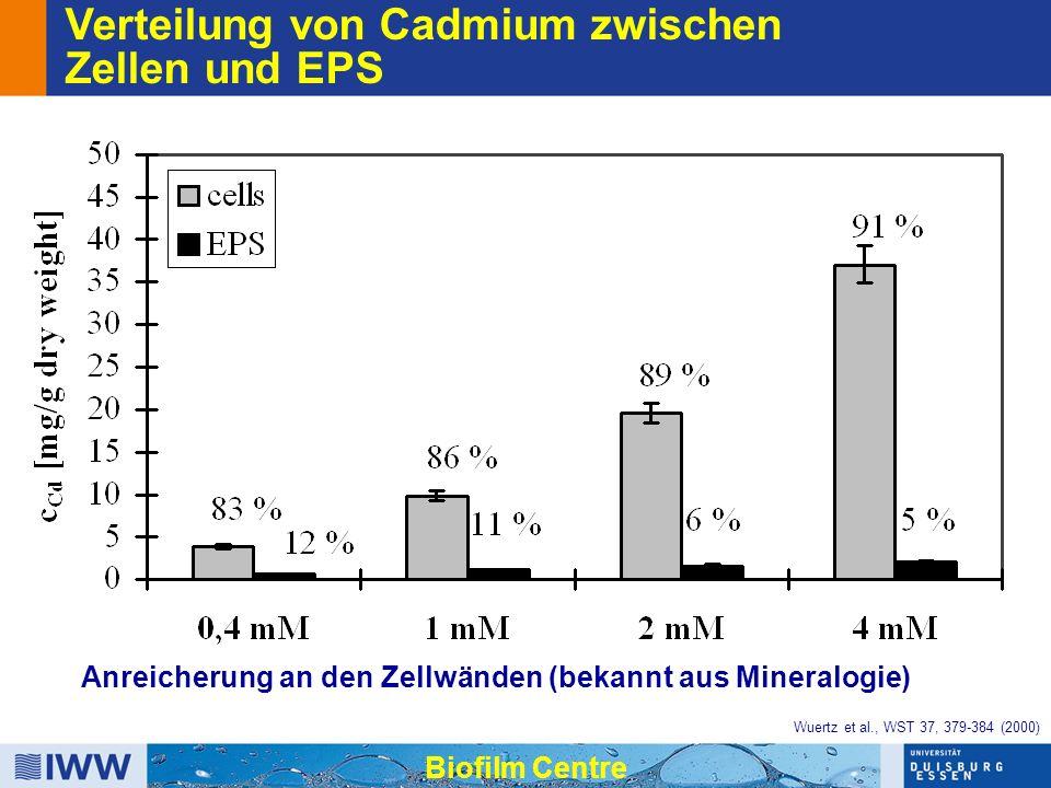 Verteilung von Cadmium zwischen Zellen und EPS Anreicherung an den Zellwänden (bekannt aus Mineralogie) Biofilm Centre Wuertz et al., WST 37, 379-384 (2000)