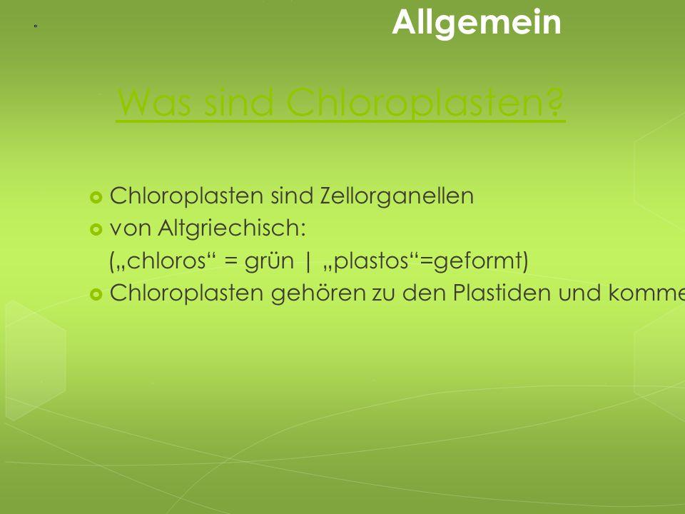 1: äußere Membran 2: Intermembranraum 3: innere Membran 4: Stroma 5: Thylakoidlumen 6: Thylakoidmembran 7: Granum 8: Thylakoid 9: Stärke(körper) 10: plastidäres Ribosom 11: plastidäre DNA 12: Plastoglobulus Fein Bau