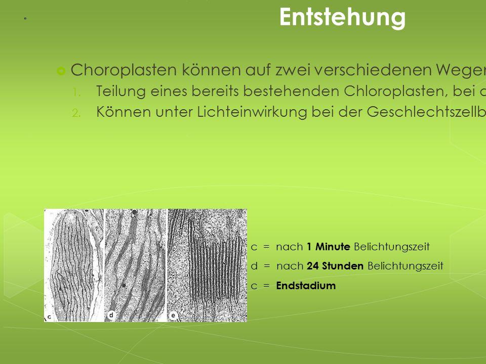 Entstehung  Choroplasten können auf zwei verschiedenen Wegen entstehen: 1. Teilung eines bereits bestehenden Chloroplasten, bei der zwei neue entsteh