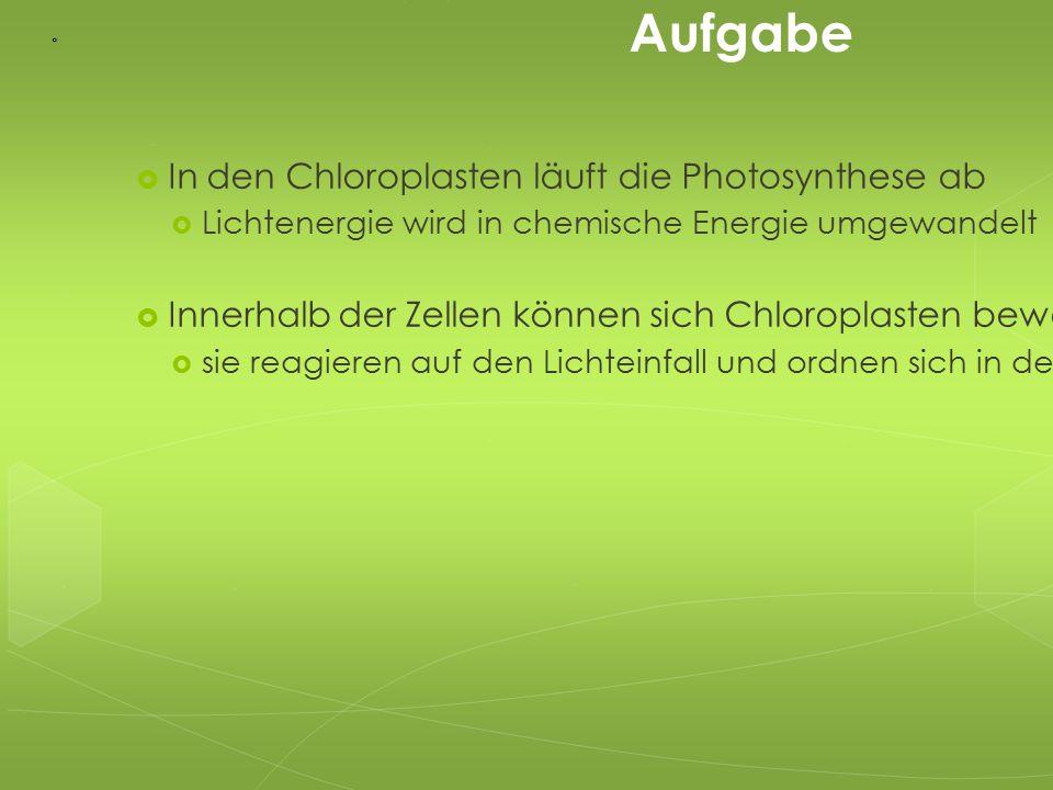 Aufgabe  In den Chloroplasten läuft die Photosynthese ab  Lichtenergie wird in chemische Energie umgewandelt  Innerhalb der Zellen können sich Chlo