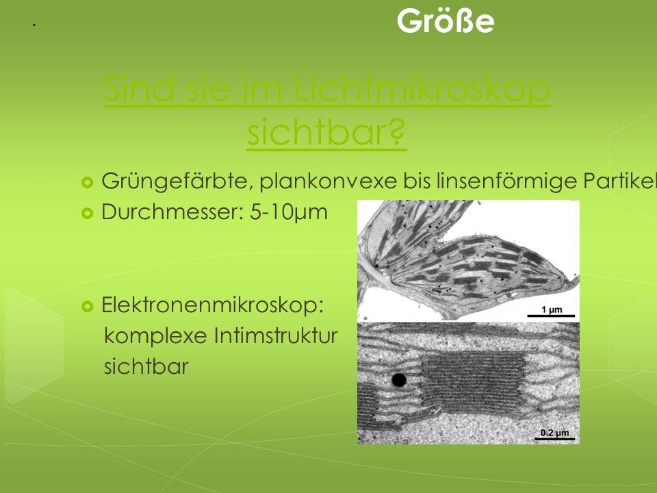 Sind sie im Lichtmikroskop sichtbar?  Grüngefärbte, plankonvexe bis linsenförmige Partikel  Durchmesser: 5-10μm  Elektronenmikroskop: komplexe Inti