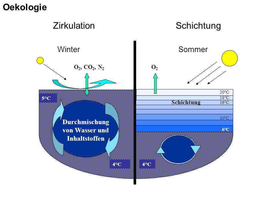 Zirkulation Schichtung WinterSommer Schichtung Durchmischung von Wasser und Inhaltstoffen O2O2 O 2, CO 2, N 2 20°C 18°C 16°C 5°C 4°C 6°C 10°C Oekologie