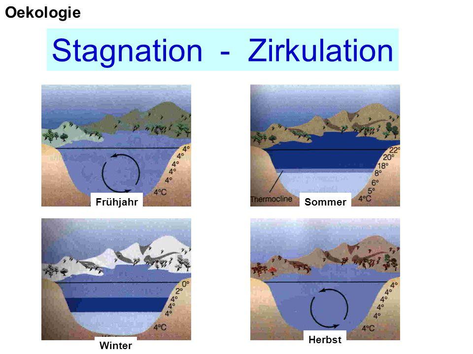 Stagnation - Zirkulation FrühjahrSommer Herbst Winter Oekologie