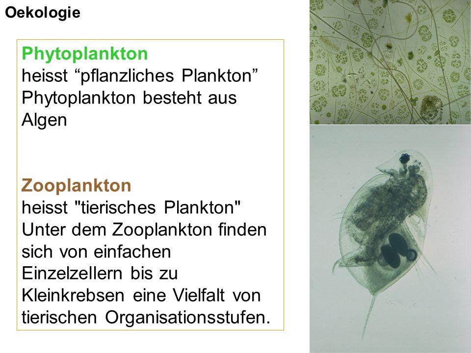 Phytoplankton heisst pflanzliches Plankton Phytoplankton besteht aus Algen Zooplankton heisst tierisches Plankton Unter dem Zooplankton finden sich von einfachen Einzelzellern bis zu Kleinkrebsen eine Vielfalt von tierischen Organisationsstufen.