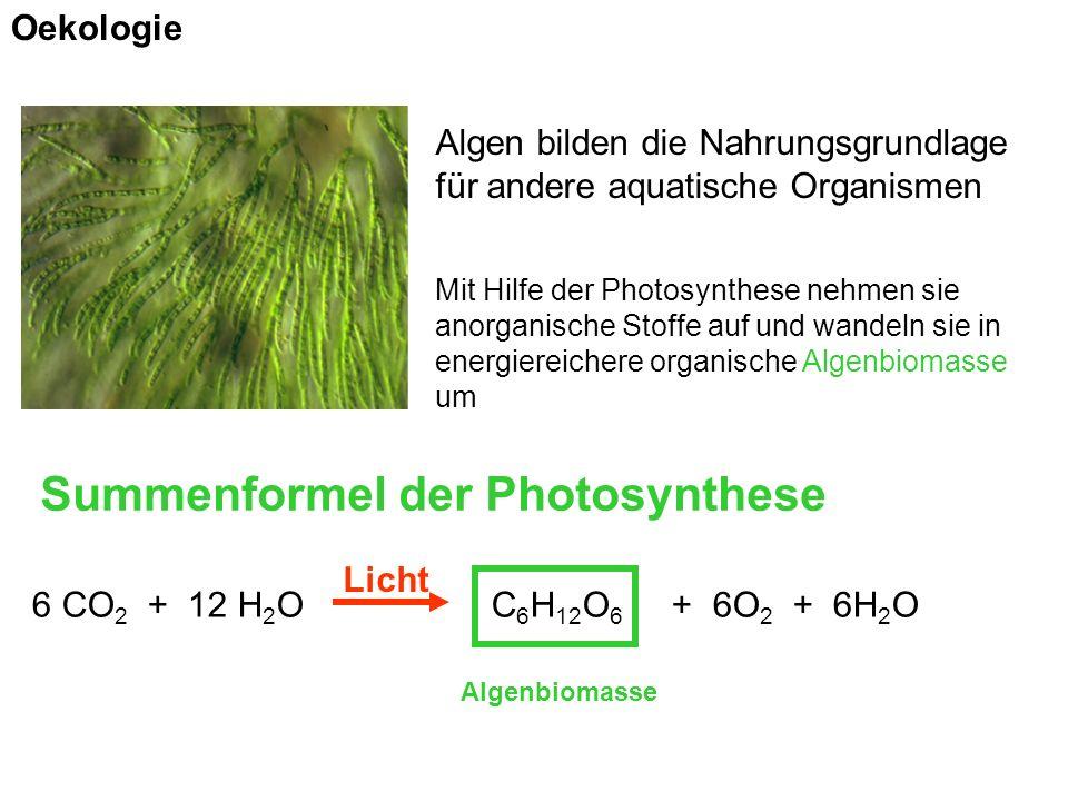 Algen bilden die Nahrungsgrundlage für andere aquatische Organismen Mit Hilfe der Photosynthese nehmen sie anorganische Stoffe auf und wandeln sie in energiereichere organische Algenbiomasse um Summenformel der Photosynthese 6 CO 2 + 12 H 2 O C 6 H 12 O 6 + 6O 2 + 6H 2 O Algenbiomasse Licht Oekologie