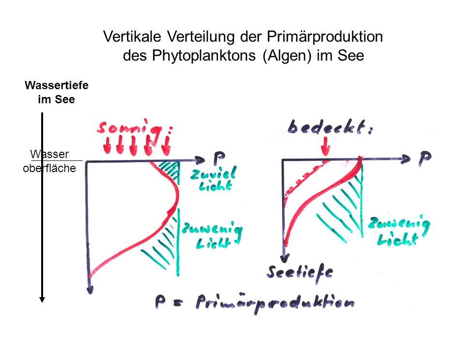 Wassertiefe im See Vertikale Verteilung der Primärproduktion des Phytoplanktons (Algen) im See Wasser oberfläche